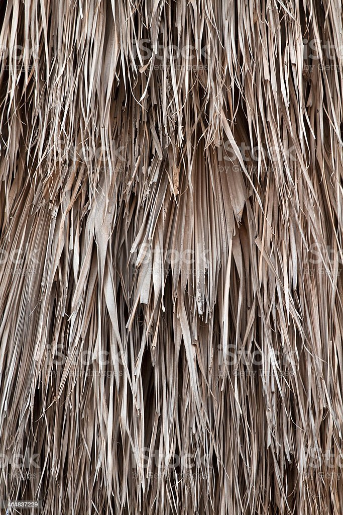 Withered  Leaves of  Palm. stock photo