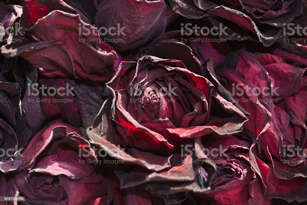 withered red roses background stock photo