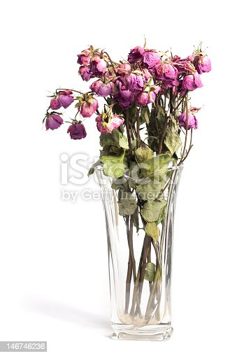 A bouquet of dead roses in a vase on a white background.