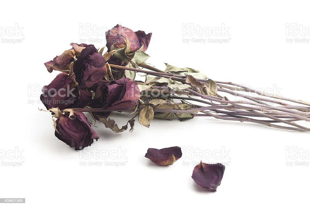 Withered roses stock photo