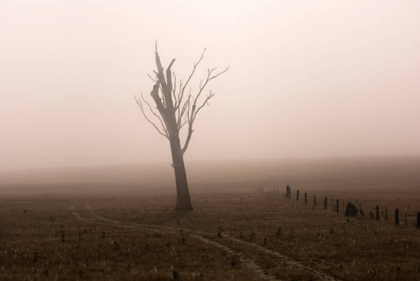 Withered tree_0119_jpg stock photo