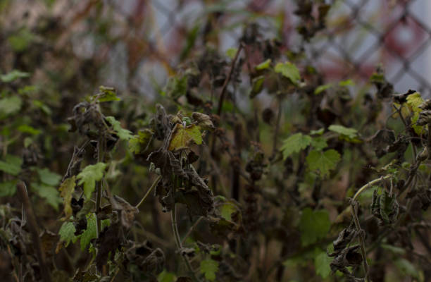 Withering wilting fading fall plants background stock photo
