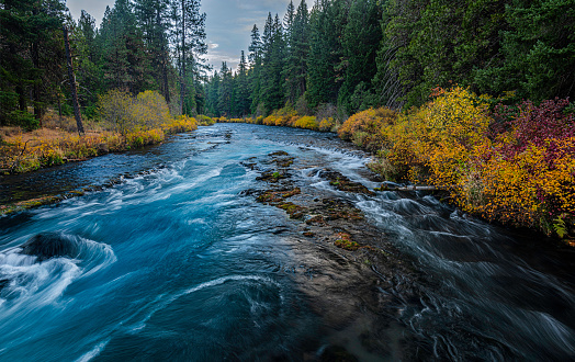 the Metolius River is a tributary of the Deschutes River in Central Oregon known for its beautiful clear blue waters and wonderful fly fishing