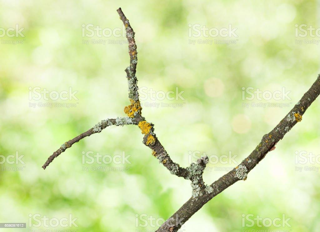Wizen twig royalty-free stock photo