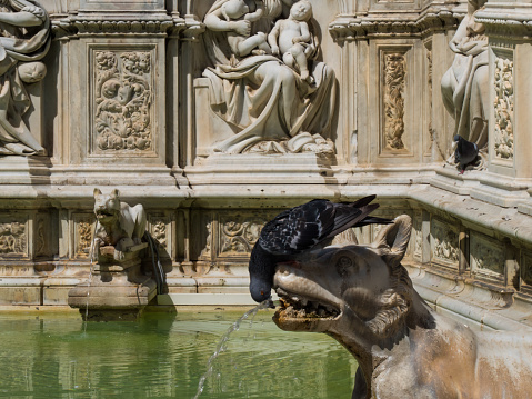 Wolf and pigeon in fountain Siena