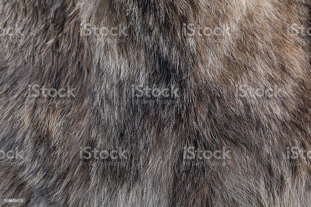 wolf fur texture stock photo