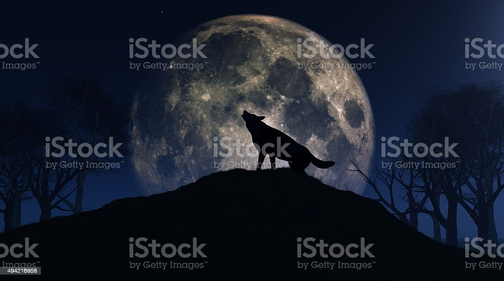 Wolf howling at the moon stock photo