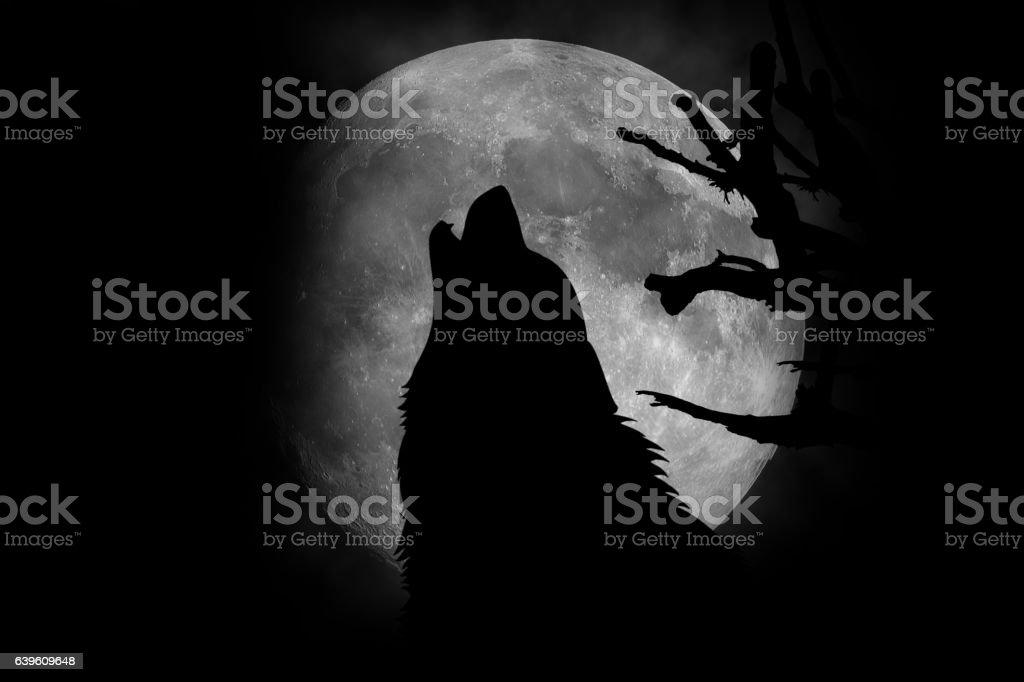 Wolf Hurlement de la Lune  photo libre de droits