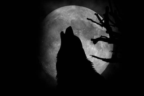 Lobo howling en la luna  - foto de stock