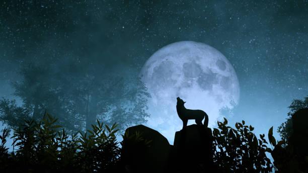 varg ylande till månen - varg bildbanksfoton och bilder