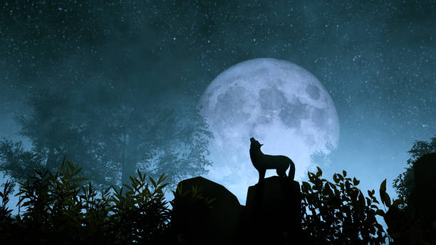 wolf howling to the moon - lupo foto e immagini stock