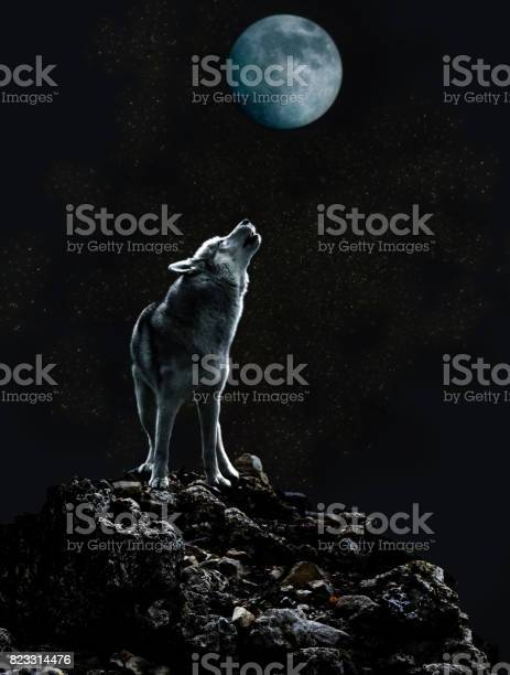 Free photos wolf and moon search, download - needpix com