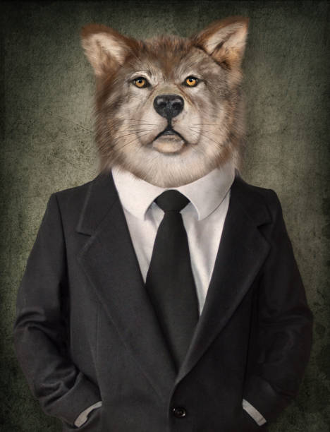 Wolf in a suit. Man with a head of lion. Concept graphic in vintage style. Wolf in a suit. Man with a head of lion. Concept graphic in vintage style. general military rank stock pictures, royalty-free photos & images