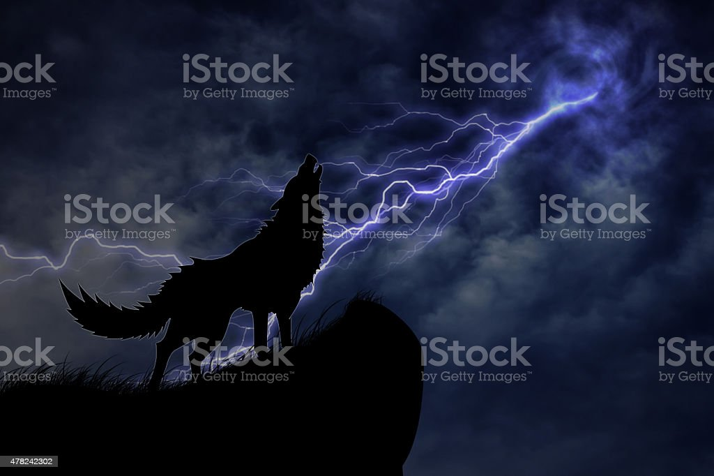 wolf in silhouette to thunderstorm stock photo