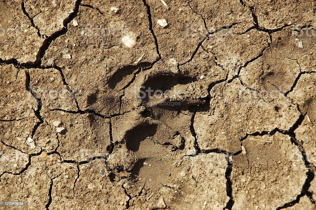 Wolf Trail Background stock photo