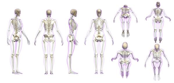Woman adult skeleton with transparent gel skin white background 3d render