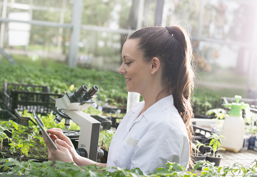 istock Woman agronomist with seedlings in greenhouse 970495616