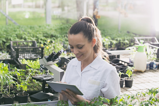 istock Woman agronomist with tablet in greenhouse 956415268