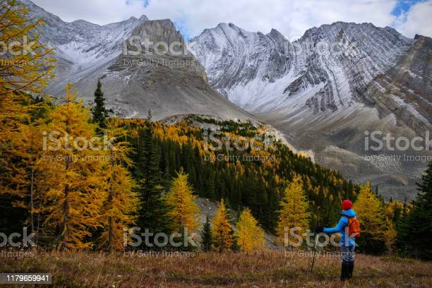 Photo of Woman among golden larches  in mountains.