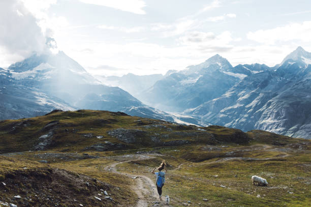 Woman and a dog enjoying a bright summer day in Swiss Alps stock photo