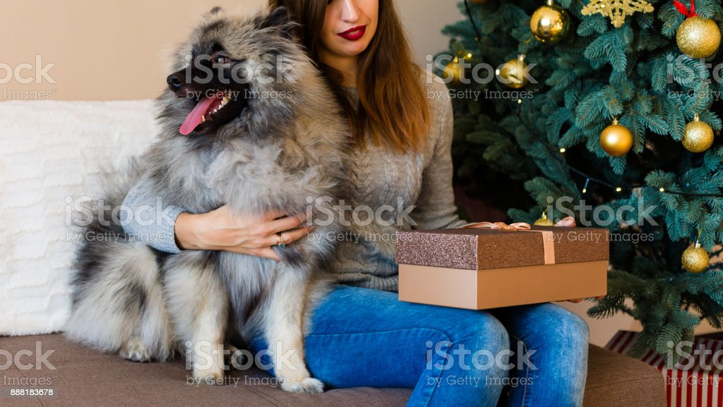 Woman and a dog sitting near the Christmas tree stock photo