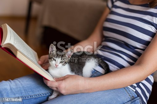 istock Woman and a kitten reading a book 1167784546