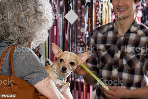 Woman and chihuahua in pet shop picture id533932523?b=1&k=6&m=533932523&s=612x612&h=ccan1ajsslyvhcguhgbyr9jra3mwoctyftptirem464=