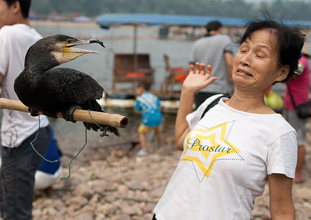 Frau und cormorant – Foto
