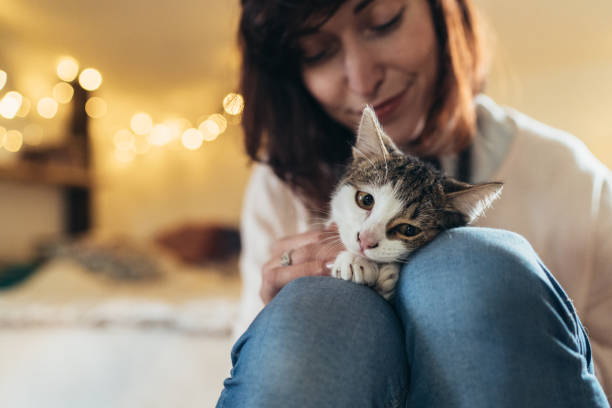 Woman and cute cat stock photo