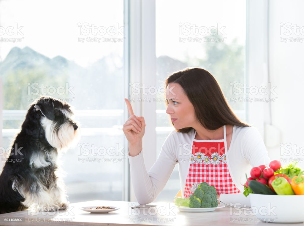 Magnificent Woman And Dog Eating At Table Stock Photo Download Image Now Download Free Architecture Designs Embacsunscenecom