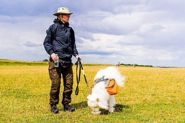 woman and dog in wind - waist bag stock photos and pictures