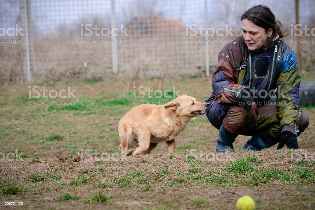 Woman and dog on training stock photo