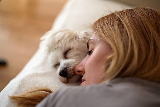 Woman and dog sleeping together stock photo