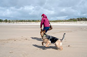Woman and German Shepherd Dog playing fetch with a stick on empty beach. Taken in Burry Port, Wales UK on a bright, cold spring day