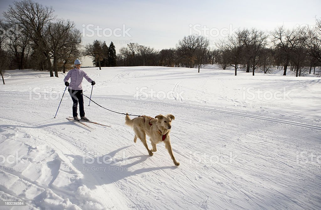 Woman and Golden Retriever Skijoring on Groomed Ski Trail. stock photo