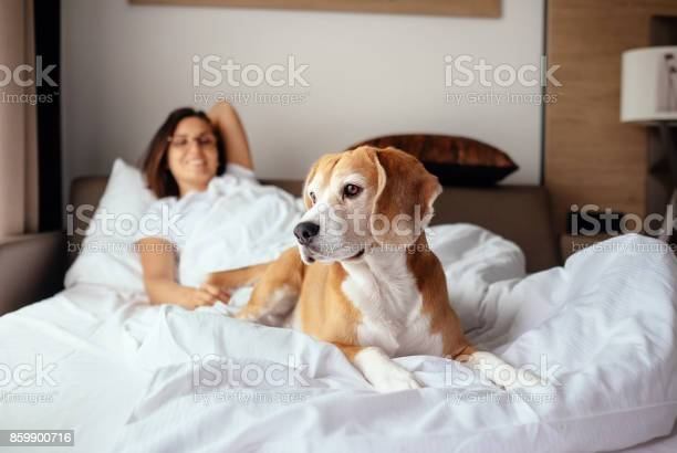Woman and her beagle dog meet morning in bed picture id859900716?b=1&k=6&m=859900716&s=612x612&h=tpsvsaeqqoiauksxgdrxs44dkzesc05 slggrq6x 9g=