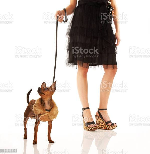 Woman and her chihuahua stand on reflective white surface picture id184848316?b=1&k=6&m=184848316&s=612x612&h=yxea12 wgc9vwyzvlvk kdgtdn3ag2owgfsgyd4neb8=