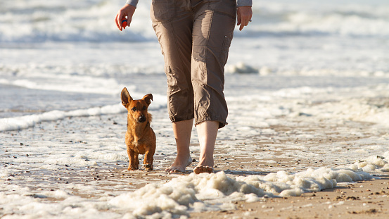 Woman and her cute little dog walking to heel at the beach.