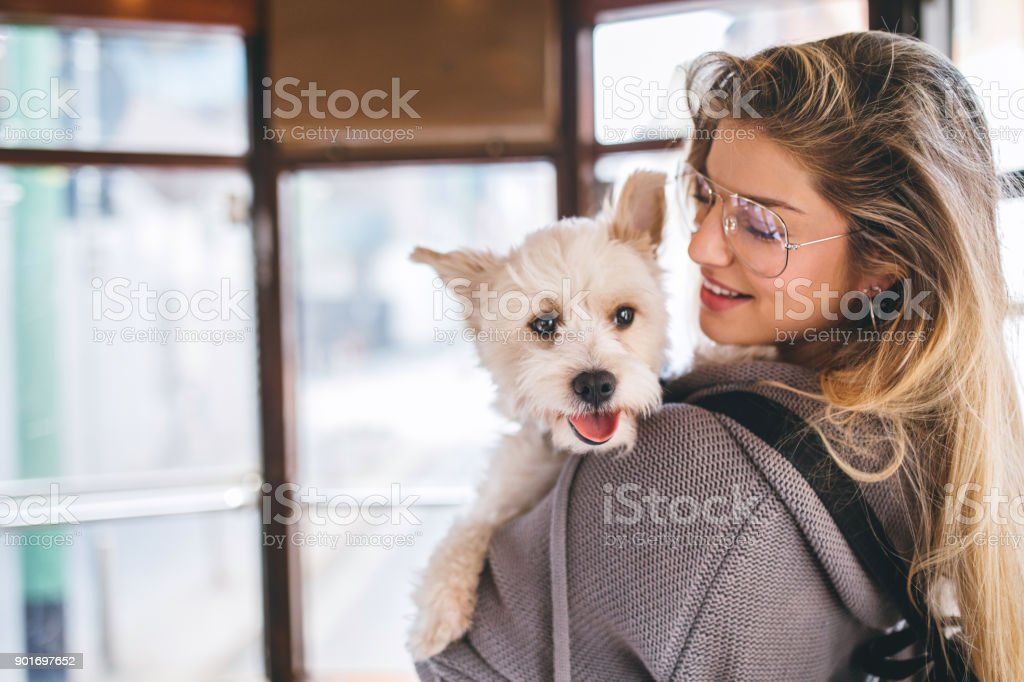 Woman and her dog in tram stock photo