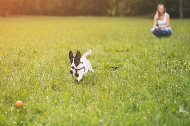 Frau und ihr Hund Jack Russell Terrier spielen – Foto