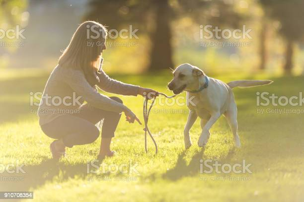 Woman and her dog picture id910708354?b=1&k=6&m=910708354&s=612x612&h=fgzisnfyggyfz6abenx0ws3gdtsobvnlq rtdc5gv1u=