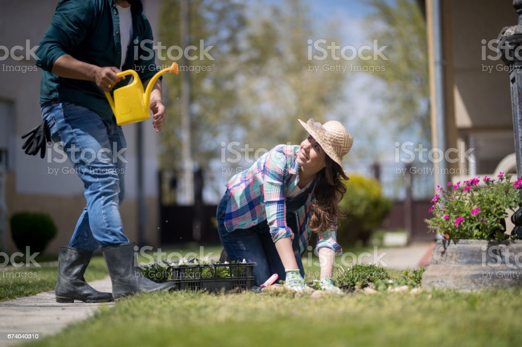 Woman and her husband doing gardening in yard stock photo