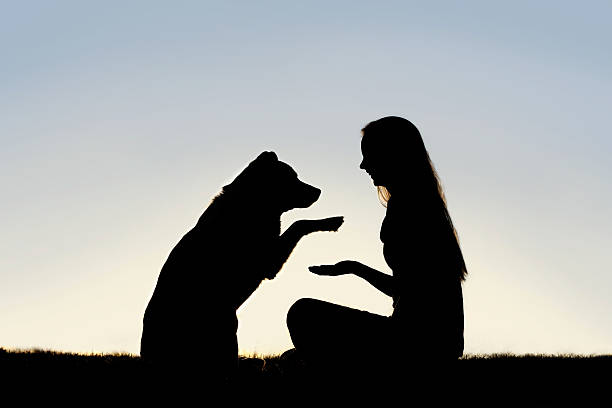 Woman and Her Pet Dog Outside Shaking Hands Silhouette stock photo