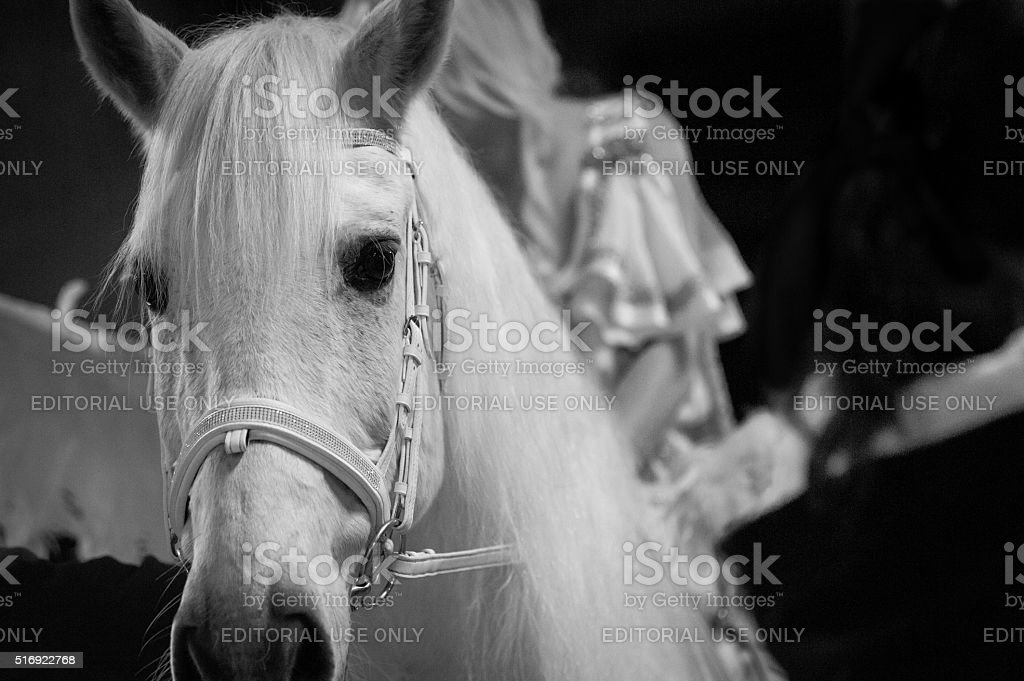 Woman and horse dressed up as Pegasus stock photo