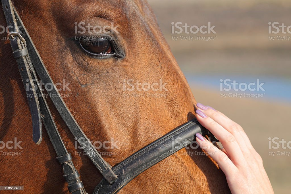 Woman and horse, loving relationship royalty-free stock photo