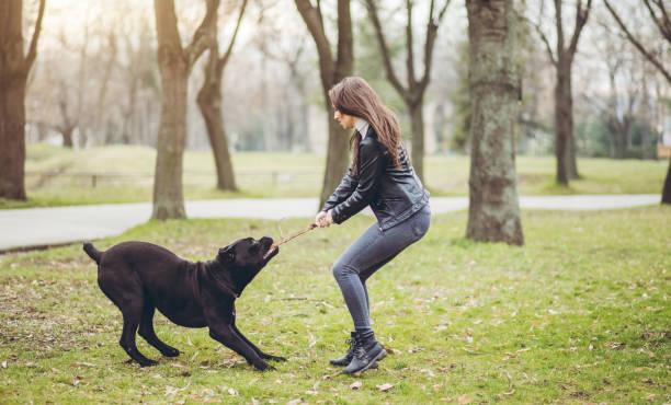 Woman and neapolitan mastiff pet dog picture id1087113882?b=1&k=6&m=1087113882&s=612x612&w=0&h=d4bm95rllmjy3sbqlaxvrbp 1yorv2f2 ydgyvqdvf0=