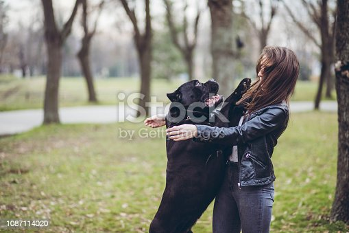 Young woman playing with her Neapolitan mastiff pet dog in a park