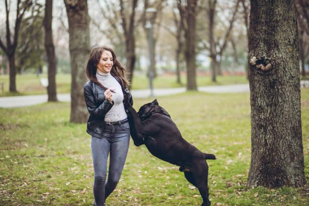 Woman and neapolitan mastiff pet dog picture id1087117612?b=1&k=6&m=1087117612&s=612x612&w=0&h=xzgizyjsska43o fmz4rhix56gxk2gbpggcfqy0dfmk=
