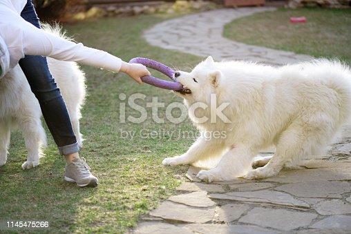 woman and Samoyed dog