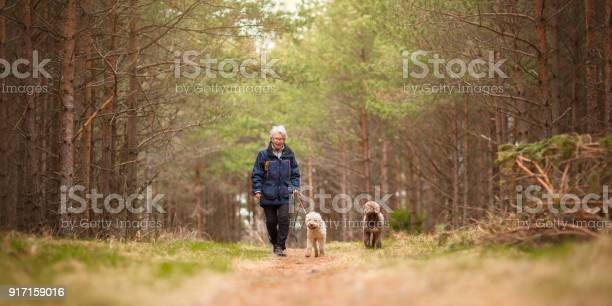 Woman and two dogs picture id917159016?b=1&k=6&m=917159016&s=612x612&h=3rysk755fzdqnbfxweqo1cbkhac1kaudqbvicd spxu=